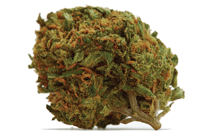 Daily Marijuana - The Best Online Cannabis Store in Canada