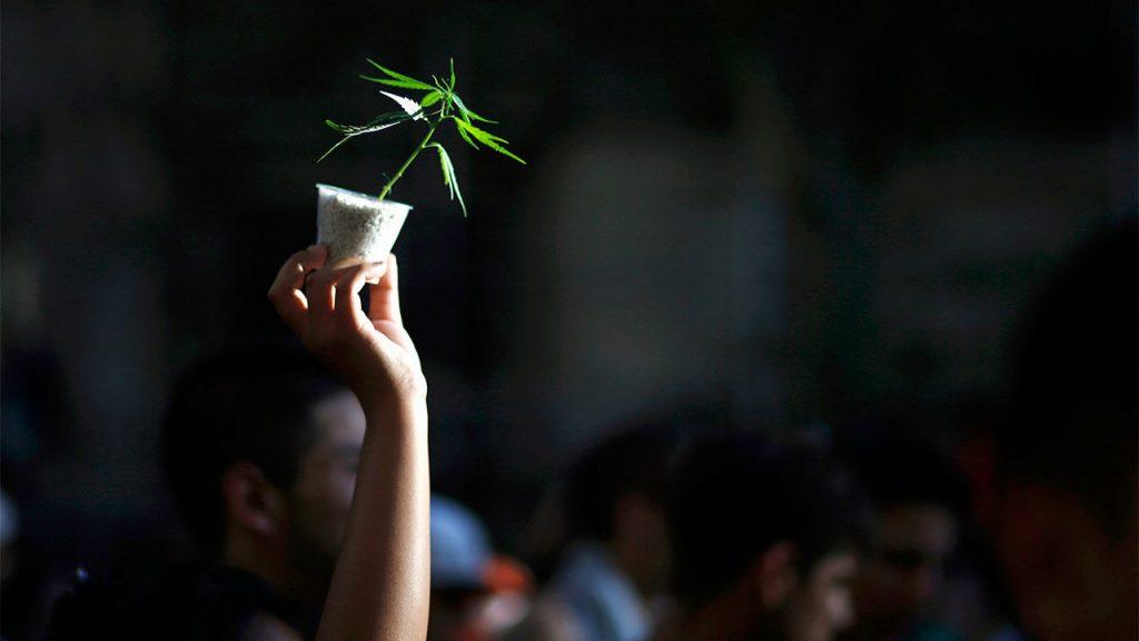 online web platform to buy weeds